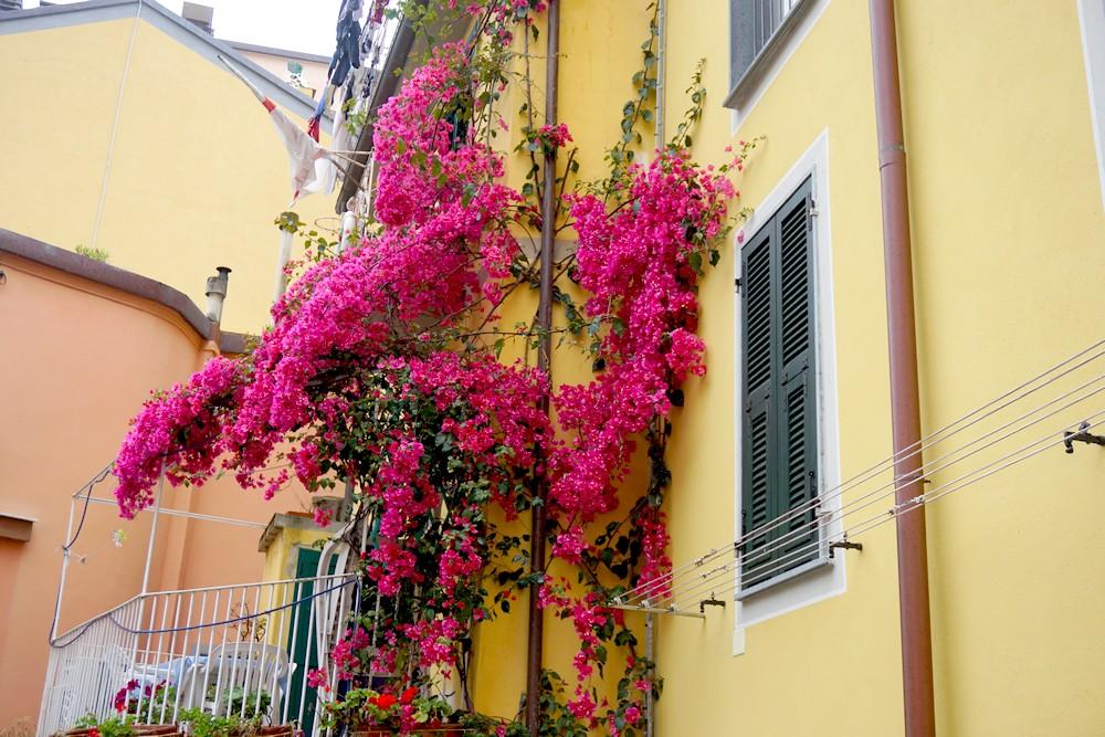 RIOMAGGIORE 5 TERRES ITALIE TOSCANE BLOG VOYAGE 12