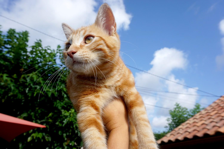 Dali onedaywithdali on a sauvé le bébé chat blog tourisme corse dutalonaucrampon 02