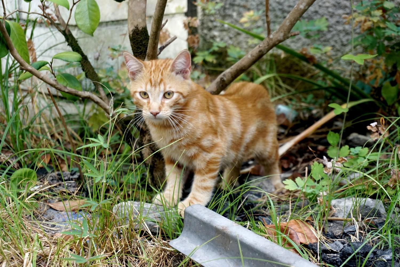 Dali onedaywithdali on a sauvé le bébé chat blog tourisme corse dutalonaucrampon 03