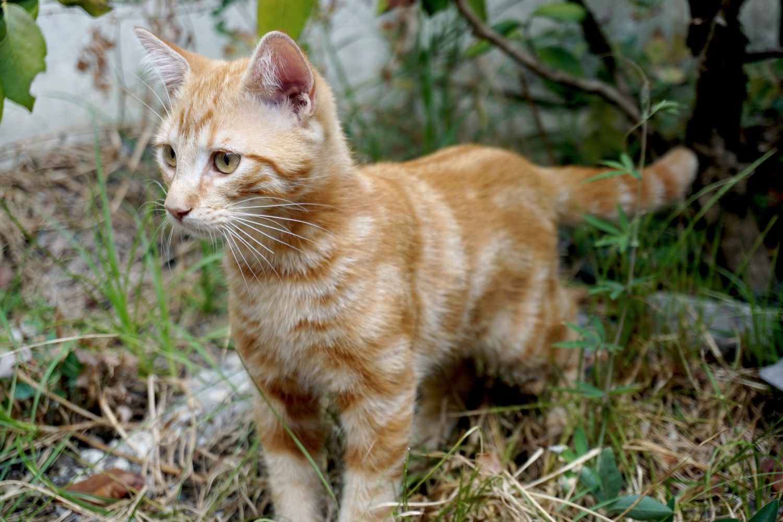 Dali onedaywithdali on a sauvé le bébé chat blog tourisme corse dutalonaucrampon 04