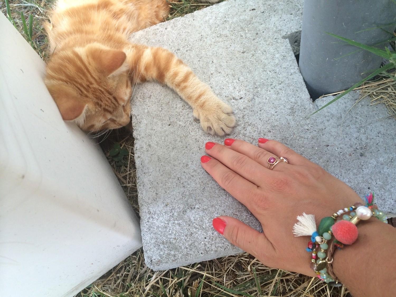 SOS bébé chat recherche famille dutalonaucrampon blog voyage corse 04
