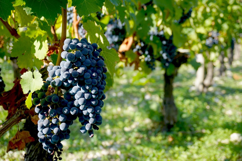 chateau-dagassac-route-des-vins-bordeaux-gironde-blog-aquitaine-voyage-tourisme-bonnes-adresse-05