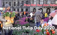 National Tulip Day in Amsterdam