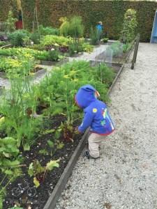 Herb Garden at Muiderslot
