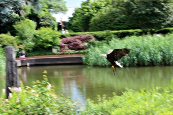 Avifauna Eagle Bird Show