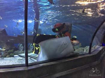 Legoland Billund Aquarium