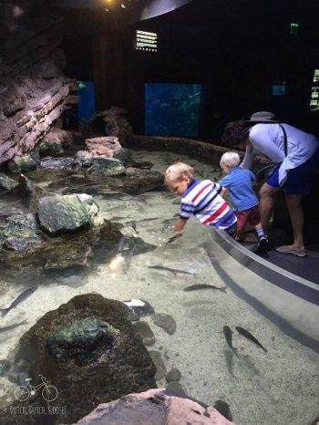 Aquarium Touch Tank