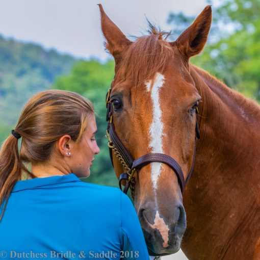 FinnTack American Quality Leather Halter on a chestnut horse with girl in blue shirt