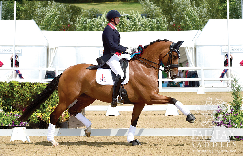 Fairfax Saddles Dressage