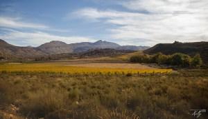 Cederbergen, Zuid-Afrika