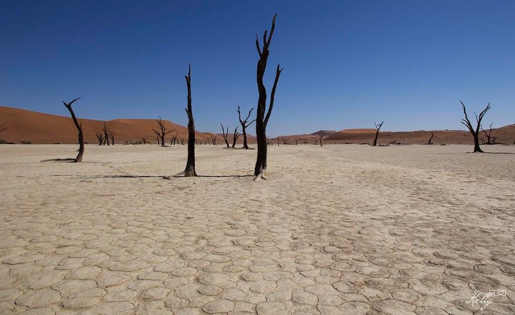 Hoogtepunten Nambibië
