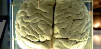 Wat is van invloed op je geheugen en je brein?