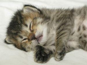 Kitten 6 09-08-09