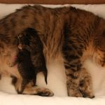 Ronja, kittens 08-02-2010