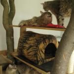 Ronja, Monty, Pippa 04-07-10
