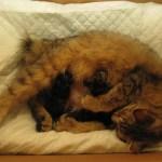 Pippa en de eerste 3 kittens