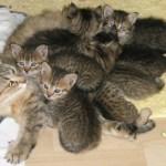 Kittens Emmy 17 juni 2011