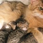 Kittens Pippa 17 juni 2011