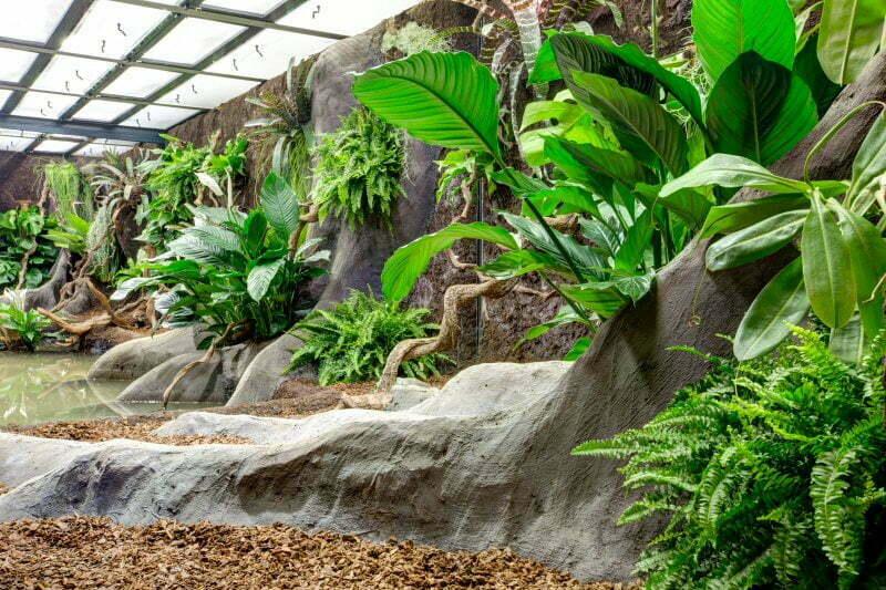 Gaia Zoo  Dutch Rana