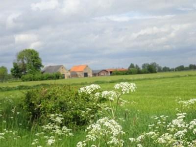 Uitzicht vlakbij Millingen
