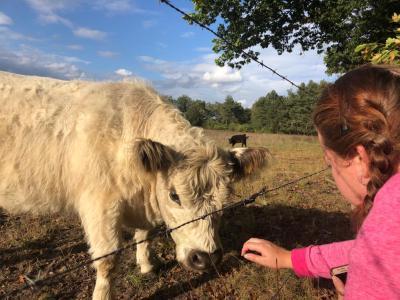 Lindsey en koeien