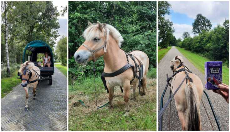 Huifkarvakantie - met paard en wagen door Drenthe