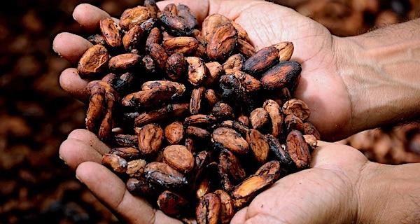 cacao chocolade