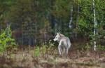Overheid VS doodt duizenden dieren met cyanidebommen
