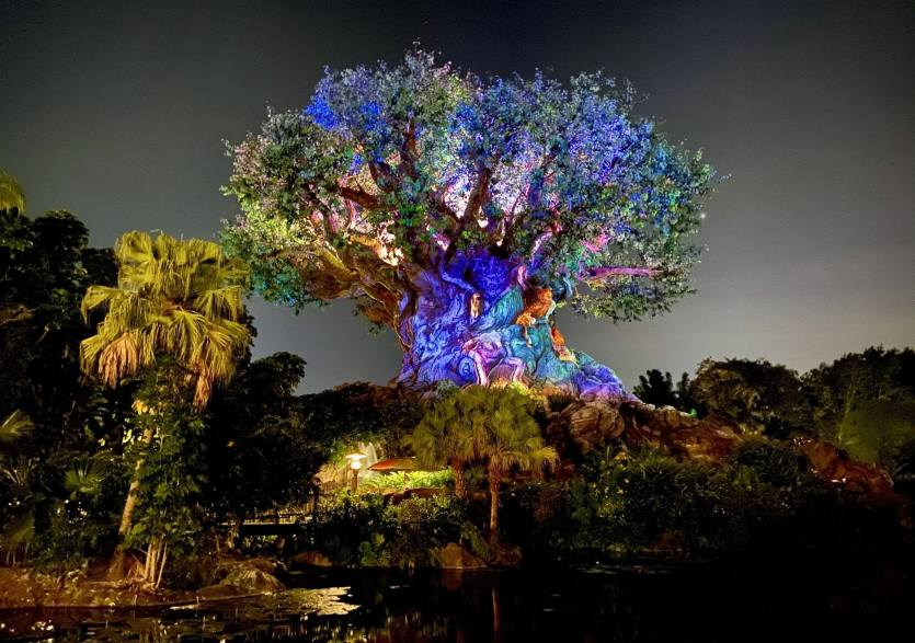NYE at Disney's Animal Kingdom