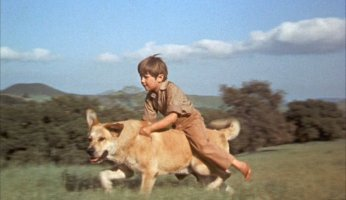 Old Yeller Dvd Review