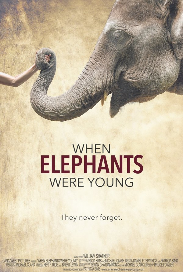 Elephants Young Dvd Release Date January 17 2017