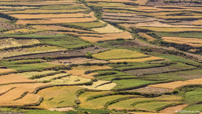 Terraced farming helps to prevent soil erosion in the north of Ethiopia.