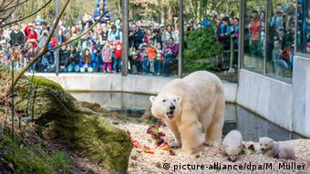 An ice bear in a zoo in Munich in front of people watching (Photo: picture-alliance/dpa/M. Müller).