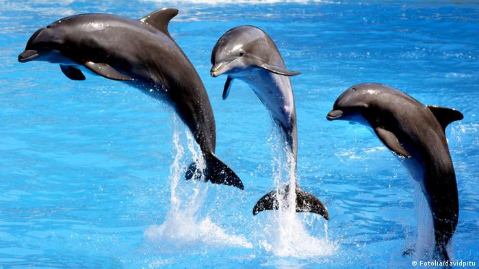 dolphins gain unprecedented protection