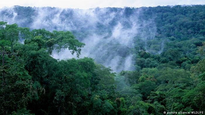 Kongobecken Regenwald Nebel Kongo Afrika (picture alliance/ WILDLIFE)