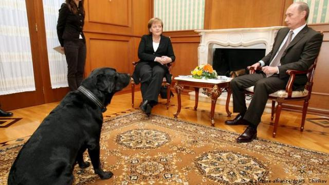 Merkel and Putin sit at a table in Sochi with Putin's dog looking on (picture-alliance/dpa/S. Chirikov)