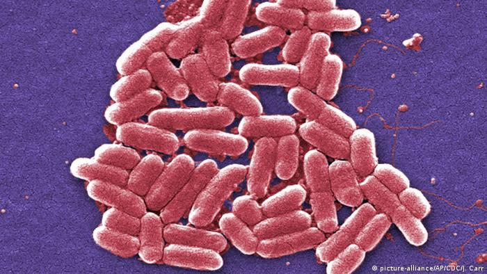 E. coli and EHEC