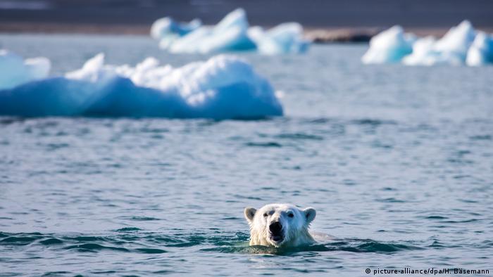 Arktis - Eisbär schwimmt (picture-alliance/dpa/H. Bäsemann)