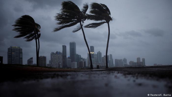 Hurricane Irma blows trees in Miami (Reuters/C. Barria)