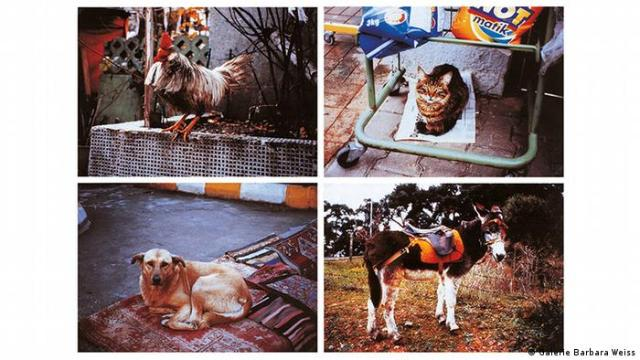 photos of a donkey, dog, cat and rooster (Galerie Barbara Weiss)