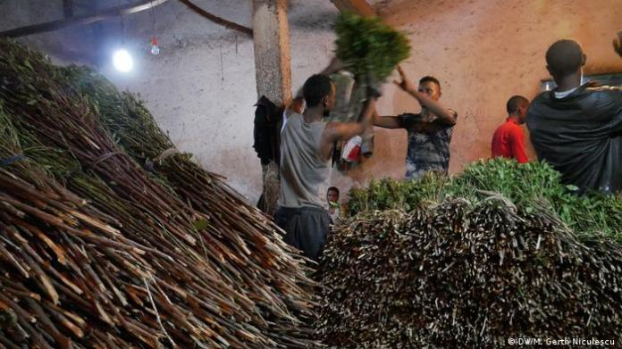 Young men loading khat for export (DW/M. Gerth Niculescu )