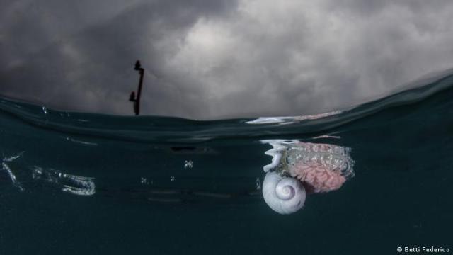 A sea snail
