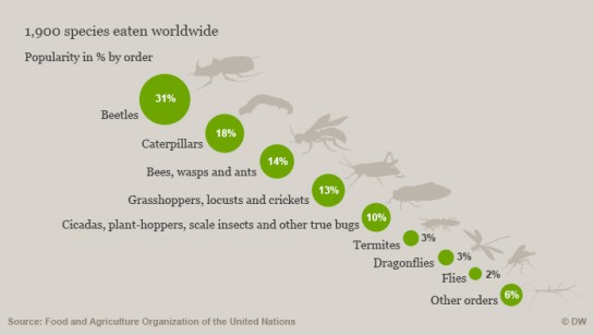 Graphic showing the most popular edible insects, by order