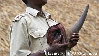 A Kenyan wildlife conservation official holds a rhino horn (Photo: ROBERTO SCHMIDT/AFP/Getty Images)
