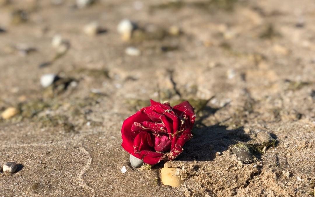 Wisdom in a Rose