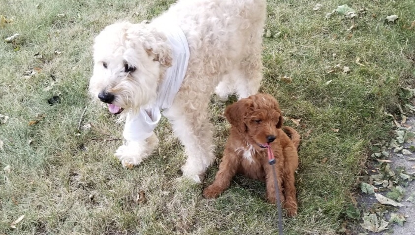 A Word About Puppy Training
