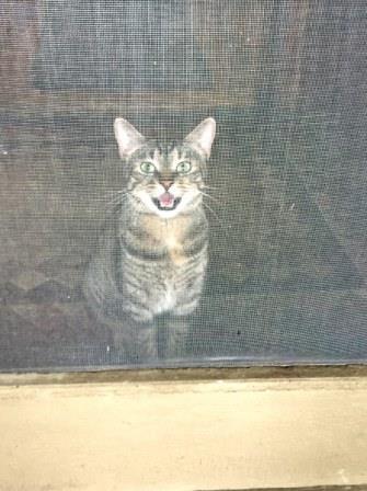 Cat Lesson?