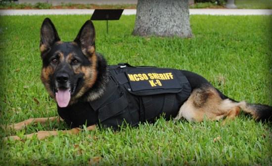 Martin County Sheriff K9 Florida