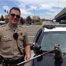 California Highway Patrol and rescued critter