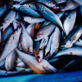 La Sardina, a lata de peixe para fotografia grande-angular - fish - DXFoto